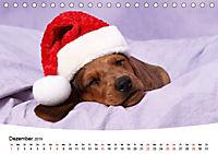 Süße Träume 2019 - schlafende Hundewelpen (Tischkalender 2019 DIN A5 quer) - Produktdetailbild 12