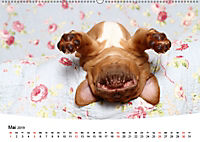 Süsse Träume 2019 - schlafende Hundewelpen (Wandkalender 2019 DIN A2 quer) - Produktdetailbild 5