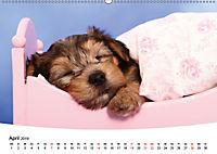 Süsse Träume 2019 - schlafende Hundewelpen (Wandkalender 2019 DIN A2 quer) - Produktdetailbild 4