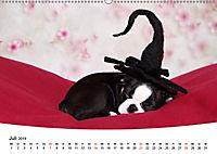Süsse Träume 2019 - schlafende Hundewelpen (Wandkalender 2019 DIN A2 quer) - Produktdetailbild 7