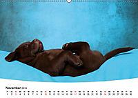 Süsse Träume 2019 - schlafende Hundewelpen (Wandkalender 2019 DIN A2 quer) - Produktdetailbild 11