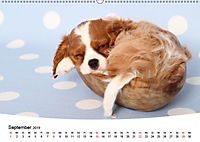 Süsse Träume 2019 - schlafende Hundewelpen (Wandkalender 2019 DIN A2 quer) - Produktdetailbild 9