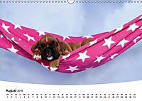 Süsse Träume 2019 - schlafende Hundewelpen (Wandkalender 2019 DIN A3 quer) - Produktdetailbild 8