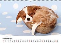 Süße Träume 2019 - schlafende Hundewelpen (Wandkalender 2019 DIN A3 quer) - Produktdetailbild 9