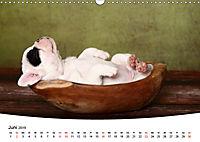 Süße Träume 2019 - schlafende Hundewelpen (Wandkalender 2019 DIN A3 quer) - Produktdetailbild 6