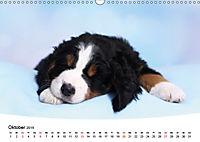 Süße Träume 2019 - schlafende Hundewelpen (Wandkalender 2019 DIN A3 quer) - Produktdetailbild 10