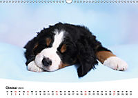 Süsse Träume 2019 - schlafende Hundewelpen (Wandkalender 2019 DIN A3 quer) - Produktdetailbild 10