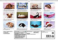 Süße Träume 2019 - schlafende Hundewelpen (Wandkalender 2019 DIN A3 quer) - Produktdetailbild 13