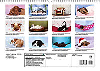 Süsse Träume 2019 - schlafende Hundewelpen (Wandkalender 2019 DIN A3 quer) - Produktdetailbild 13