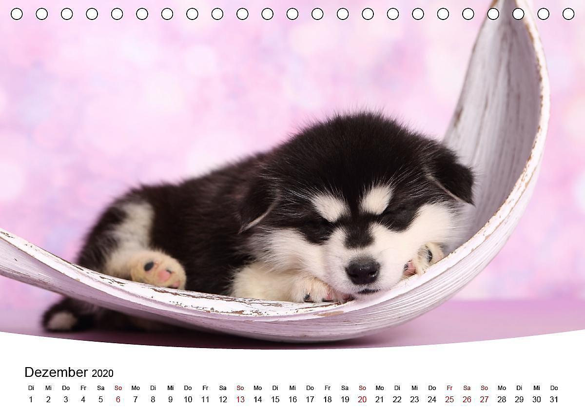 Süße Hundewelpen Bilder - Ausmalbilder und Vorlagen