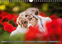 Süsse Welpenzeit - Alles ausser gewöhnlich (Wandkalender 2019 DIN A4 quer) - Produktdetailbild 3