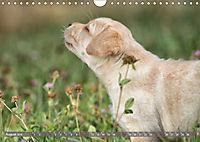 Süsse Welpenzeit - Alles ausser gewöhnlich (Wandkalender 2019 DIN A4 quer) - Produktdetailbild 8