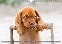 Süsse Welpenzeit - Alles ausser gewöhnlich (Wandkalender 2019 DIN A4 quer) - Produktdetailbild 2