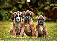 Süsse Welpenzeit - Alles ausser gewöhnlich (Wandkalender 2019 DIN A4 quer) - Produktdetailbild 5
