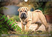 Süsse Welpenzeit - Alles ausser gewöhnlich (Wandkalender 2019 DIN A4 quer) - Produktdetailbild 9