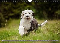 Süsse Welpenzeit - Alles ausser gewöhnlich (Wandkalender 2019 DIN A4 quer) - Produktdetailbild 10