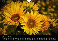 Sunflowers - Floral Impressions (Wall Calendar 2019 DIN A4 Landscape) - Produktdetailbild 1