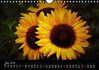 Sunflowers - Floral Impressions (Wall Calendar 2019 DIN A4 Landscape) - Produktdetailbild 7