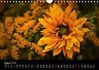 Sunflowers - Floral Impressions (Wall Calendar 2019 DIN A4 Landscape) - Produktdetailbild 8