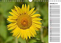 Sunflowers for a year (Wall Calendar 2019 DIN A4 Landscape) - Produktdetailbild 1