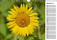 Sunflowers for a year (Wall Calendar 2019 DIN A4 Landscape) - Produktdetailbild 1