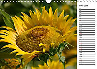 Sunflowers for a year (Wall Calendar 2019 DIN A4 Landscape) - Produktdetailbild 4