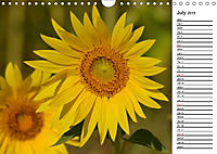 Sunflowers for a year (Wall Calendar 2019 DIN A4 Landscape) - Produktdetailbild 7