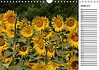 Sunflowers for a year (Wall Calendar 2019 DIN A4 Landscape) - Produktdetailbild 6