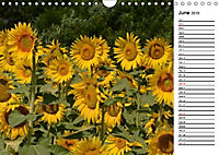 Sunflowers for a year (Wall Calendar 2019 DIN A4 Landscape) - Produktdetailbild 6