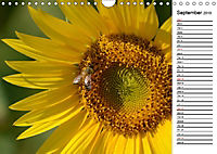 Sunflowers for a year (Wall Calendar 2019 DIN A4 Landscape) - Produktdetailbild 9