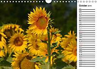 Sunflowers for a year (Wall Calendar 2019 DIN A4 Landscape) - Produktdetailbild 10