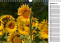 Sunflowers for a year (Wall Calendar 2019 DIN A4 Landscape) - Produktdetailbild 10