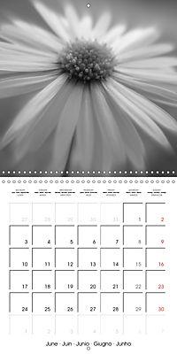 Sunlight impressions (Wall Calendar 2019 300 × 300 mm Square) - Produktdetailbild 6