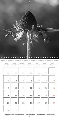 Sunlight impressions (Wall Calendar 2019 300 × 300 mm Square) - Produktdetailbild 9