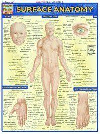 Surface Anatomy, Vince Perez
