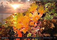 Surreale Unterwasserwelt (Wandkalender 2019 DIN A3 quer) - Produktdetailbild 9