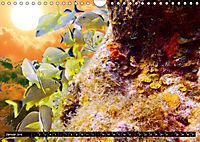 Surreale Unterwasserwelt (Wandkalender 2019 DIN A4 quer) - Produktdetailbild 1