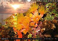 Surreale Unterwasserwelt (Wandkalender 2019 DIN A4 quer) - Produktdetailbild 9