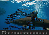 Sven Gruse Under Water! Fish Shooting (Wall Calendar 2019 DIN A3 Landscape) - Produktdetailbild 7