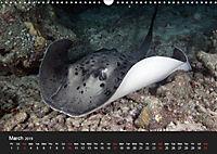 Sven Gruse Under Water! Fish Shooting (Wall Calendar 2019 DIN A3 Landscape) - Produktdetailbild 3