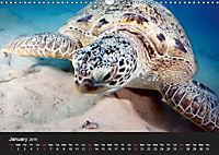 Sven Gruse Under Water! Fish Shooting (Wall Calendar 2019 DIN A3 Landscape) - Produktdetailbild 1