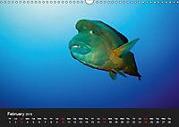 Sven Gruse Under Water! Fish Shooting (Wall Calendar 2019 DIN A3 Landscape) - Produktdetailbild 2