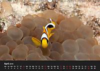 Sven Gruse Under Water! Fish Shooting (Wall Calendar 2019 DIN A3 Landscape) - Produktdetailbild 4