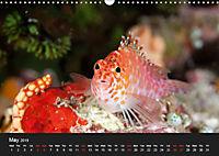 Sven Gruse Under Water! Fish Shooting (Wall Calendar 2019 DIN A3 Landscape) - Produktdetailbild 5