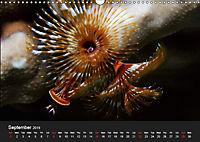 Sven Gruse Under Water! Fish Shooting (Wall Calendar 2019 DIN A3 Landscape) - Produktdetailbild 9