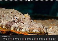 Sven Gruse Under Water! Fish Shooting (Wall Calendar 2019 DIN A3 Landscape) - Produktdetailbild 10