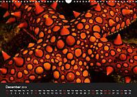 Sven Gruse Under Water! Fish Shooting (Wall Calendar 2019 DIN A3 Landscape) - Produktdetailbild 12