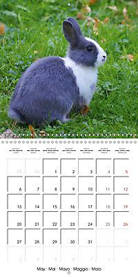 Sweet Bunny (Wall Calendar 2019 300 × 300 mm Square) - Produktdetailbild 5