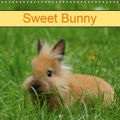 Sweet Bunny (Wall Calendar 2019 300 × 300 mm Square), kattobello