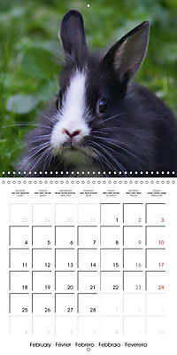Sweet Bunny (Wall Calendar 2019 300 × 300 mm Square) - Produktdetailbild 2